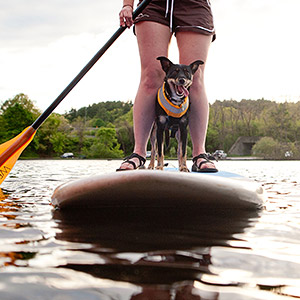 Dog on Standup Paddleboard on the Charles River in Boston, MA. Come paddle in Boston with Charles River Canoe & Kayak!